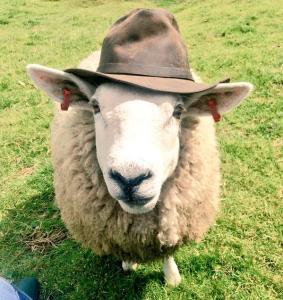 Gunner The Sheep